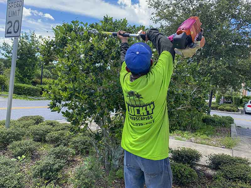 Commercial Landscaper in South Florida