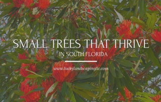 Trees For South Florida