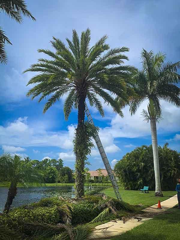 Residential Estate Landscape Maintenance